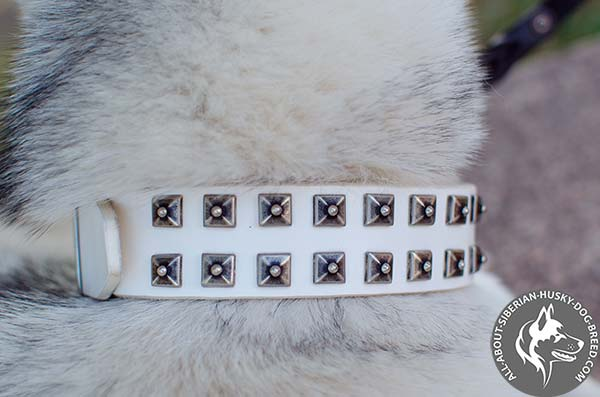 White Siberian Husky Collar with 2 Rows of Old-looking Studs
