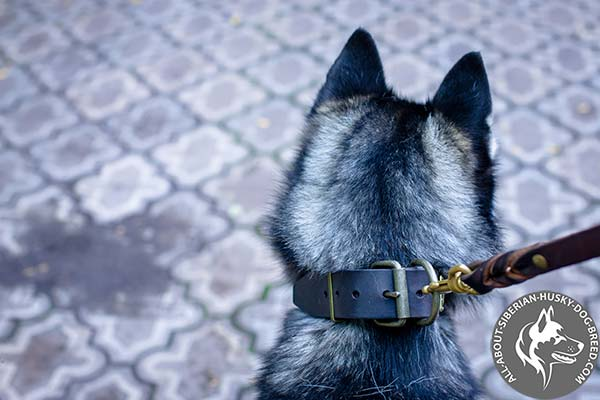 Leather Siberian Husky Collar with Massive Hardware