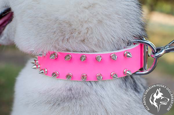 Stylish Walking  Leather Husky Collar with Cool Spikes