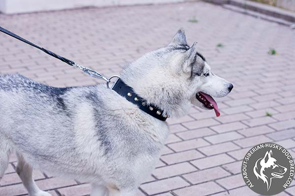 Adjustable Leather Siberian Husky Collar with Rust-free Hardware