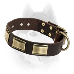 Luxury style leather Siberian Husky collar with old style brass plates