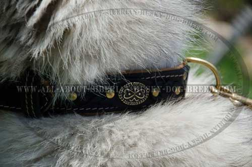 Nappa padded leather Siberian Husky collar