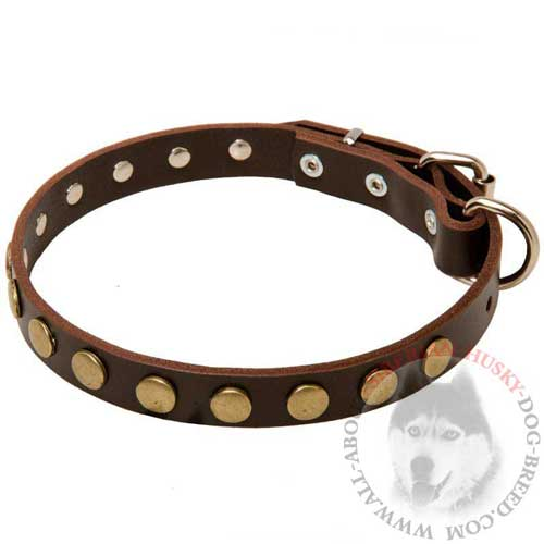 Leather Studded Siberian Husky Collar with Brass Circles