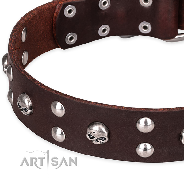 Daily leather dog collar with luxurious adornments