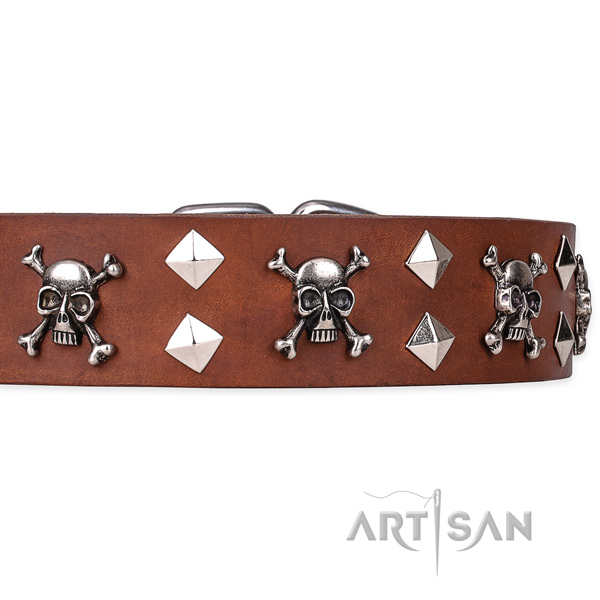 Everyday leather dog collar with refined adornments