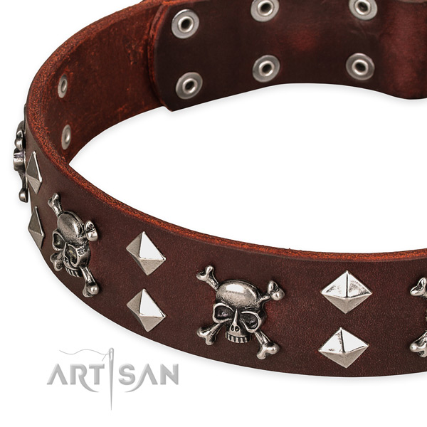 High quality leather dog collar for stylish walks