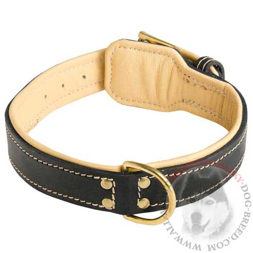Leather Siberian Husky Collar Nappa Padded