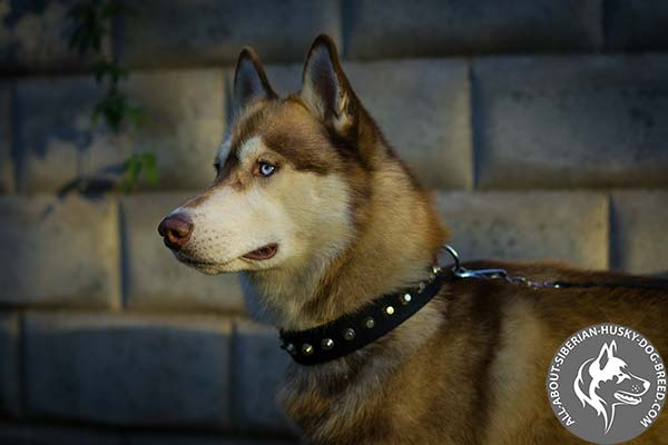 Nylon Siberian Husky Collar with Silver-like Cones