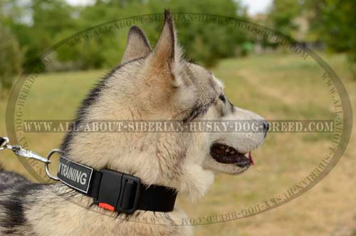 Nylon Siberian Husky collar with easy quick release buckle