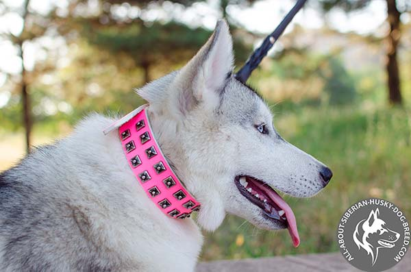 Matchless Leather Siberian Husky Collar with Antiqued Studs