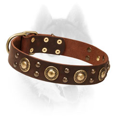Firm Leather Siberian Husky Collar Decorated     with Brass Circles