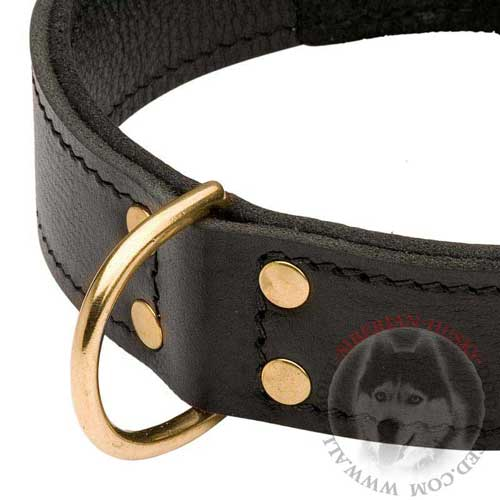 Siberian Husky Dog Collar Leather with Brass D-ring Secured with Rivets