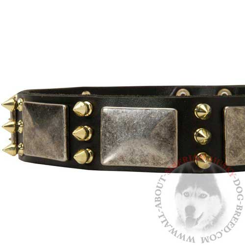 Siberian Husky Leather Collar with Brass Spikes and Nickel Plates