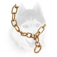 Strong Siberian Husky collar in goldish     color