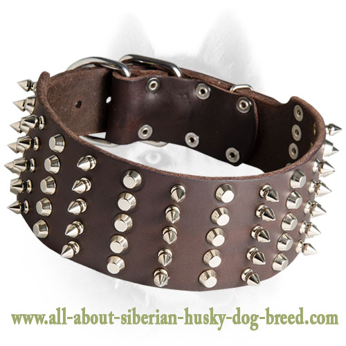 Extra Wide Leather Spiked and Studded Collar for Siberian Husky