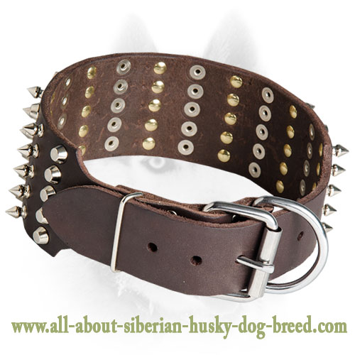 Spikes and Studs Decorate Leather Siberian Husky Collar