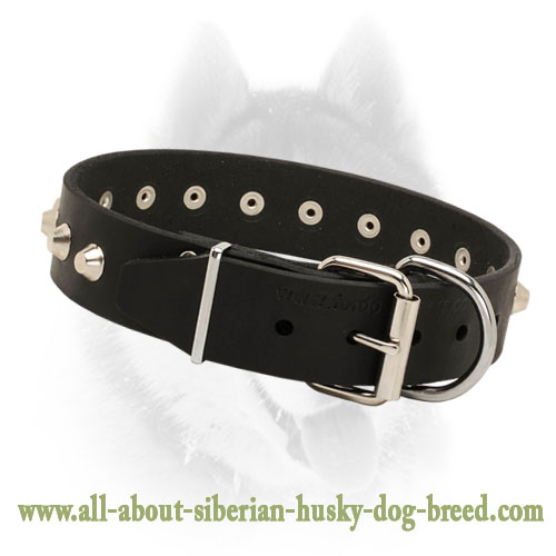 Leather Dog Collar with Pyramids for Daily Walks