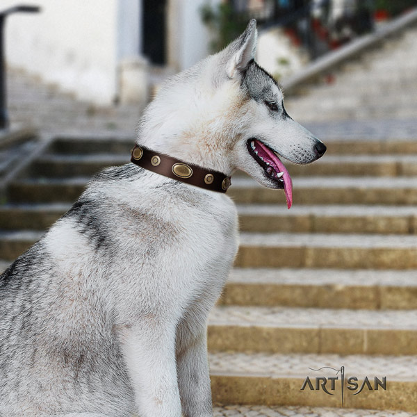 Siberian Husky leather dog collar with embellishments for comfy wearing