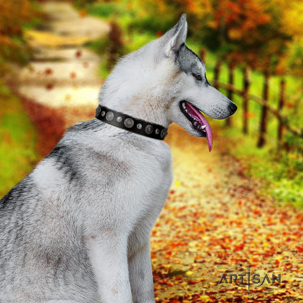 Siberian Husky full grain genuine leather dog collar with adornments for everyday use