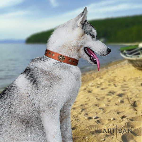 Siberian Husky full grain leather dog collar with embellishments for daily use