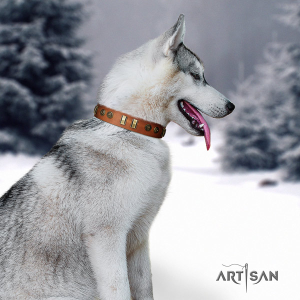 Siberian Husky genuine leather dog collar with studs for daily walking