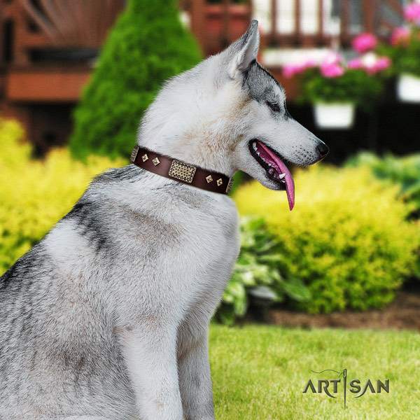Siberian Husky full grain leather dog collar with embellishments for comfortable wearing