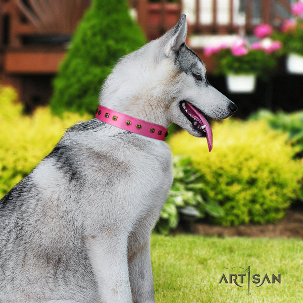 Siberian Husky leather dog collar with studs for everyday use