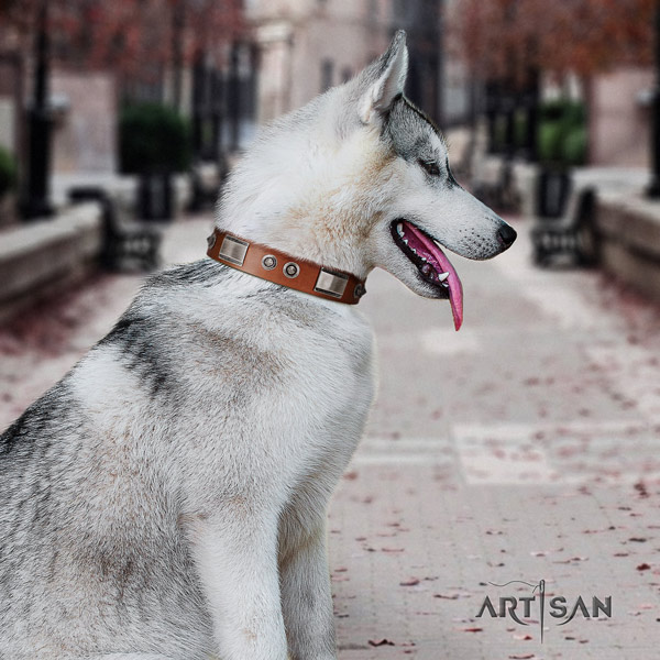 Siberian Husky stunning adorned genuine leather dog collar