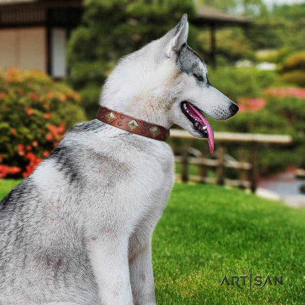 Siberian Husky genuine leather dog collar with decorations for comfy wearing