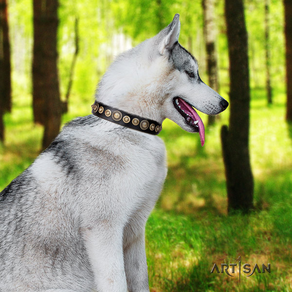 Siberian Husky genuine leather dog collar with adornments for comfy wearing