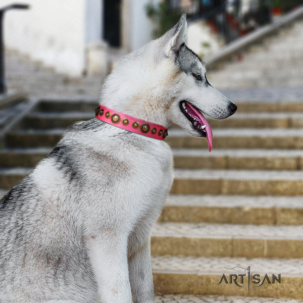 Siberian Husky full grain genuine leather dog collar with studs for walking