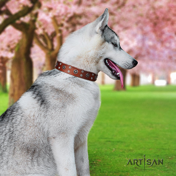 Siberian Husky leather dog collar with embellishments for walking