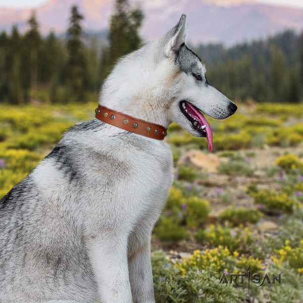 Siberian Husky leather dog collar with embellishments for everyday walking