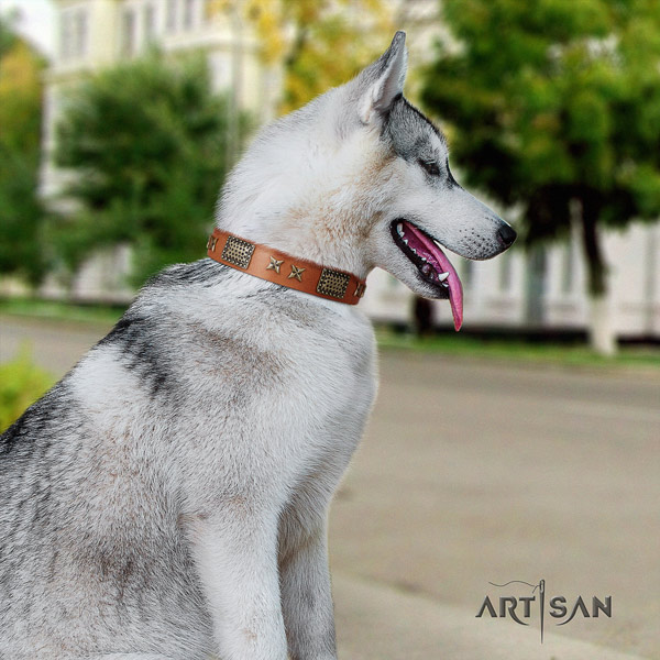 Siberian Husky full grain leather dog collar with embellishments for fancy walking