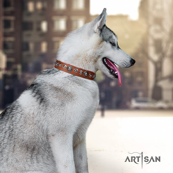 Siberian Husky genuine leather dog collar with studs for stylish walking