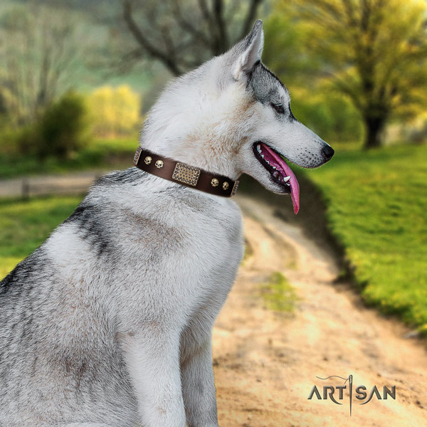 Siberian Husky natural genuine leather dog collar with studs for everyday use