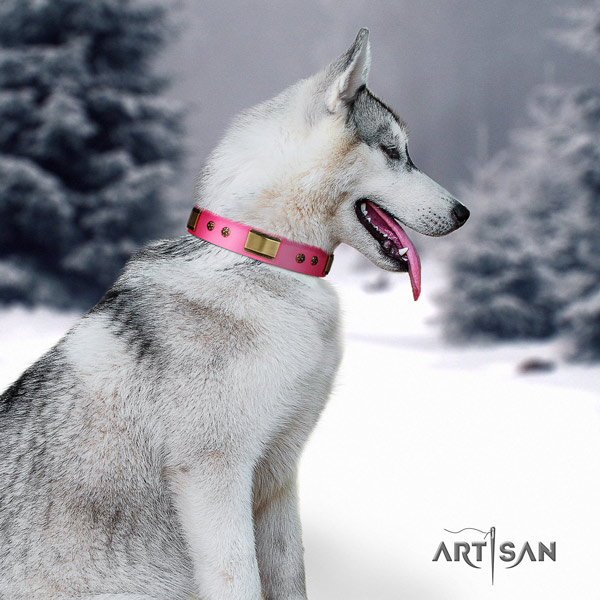 Siberian Husky full grain leather dog collar with studs for daily use