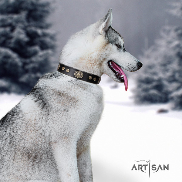 Siberian Husky genuine leather dog collar with studs for fancy walking