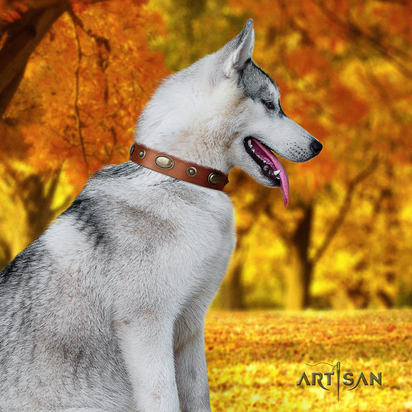 Siberian Husky full grain genuine leather dog collar with studs for daily walking