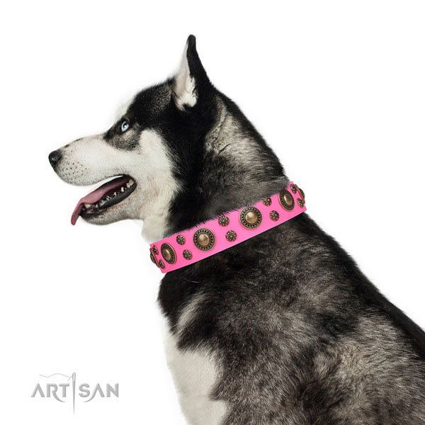 Siberian Husky incredible full grain genuine leather dog collar for fancy walking