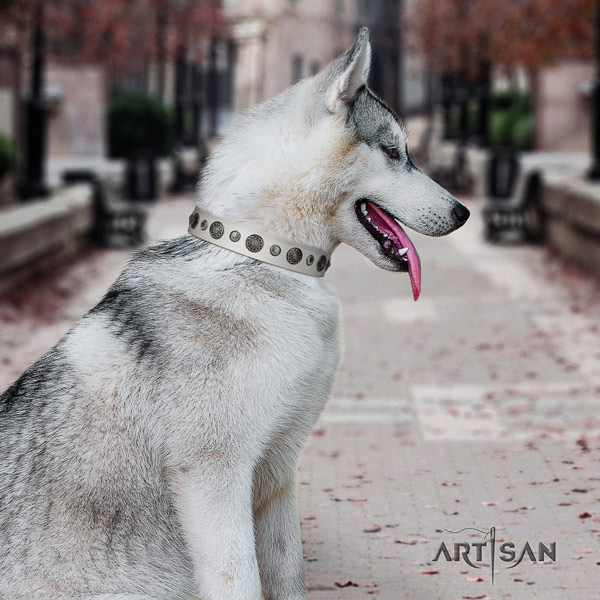 Siberian Husky full grain natural leather dog collar with studs for stylish walking