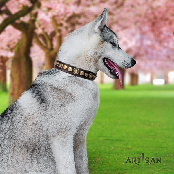 Siberian Husky full grain natural leather dog collar with adornments for handy use