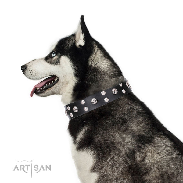 Siberian Husky adorned full grain natural leather dog collar for everyday use