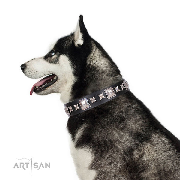 Siberian Husky inimitable full grain genuine leather dog collar for handy use