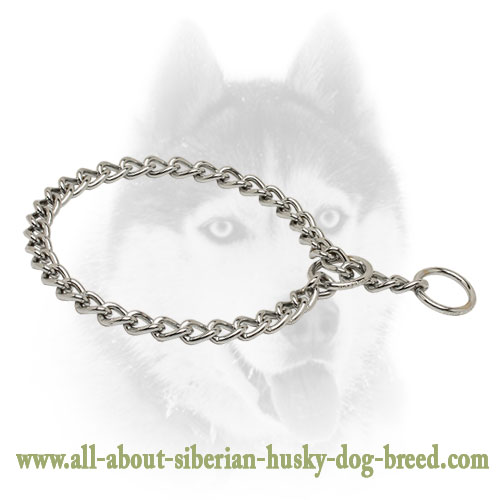 Siberian Husky Chain Slip Collar for Walking and Training