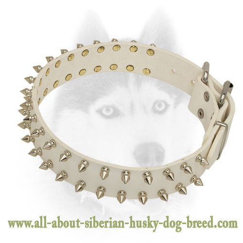 Incredible leather Siberian Husky collar with old nickel  spikes