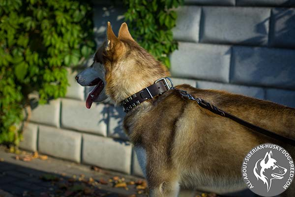 Studded Leather Siberian Husky Collar with Traditional Buckle
