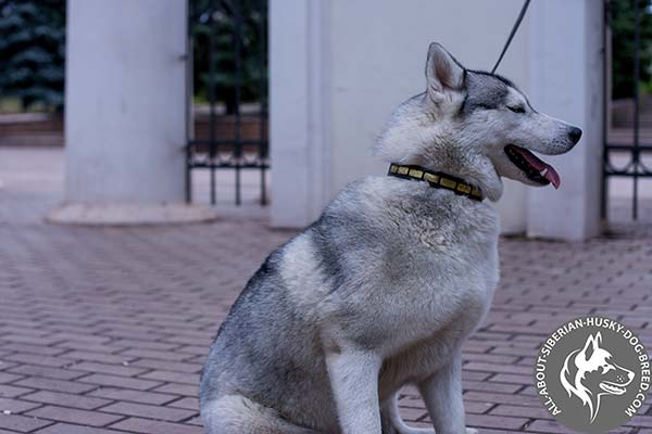 Hand Polished Leather Siberian Husky Collar