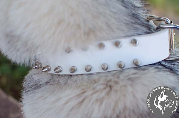 Attractive White Leather Siberian Husky Collar with Shiny Spikes