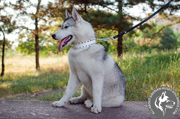 Exclusive White Spiked Leather Collar for Elegant Look